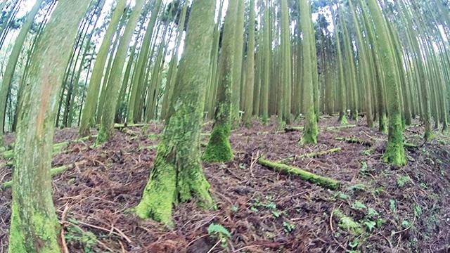 古処山の木々